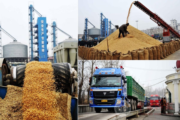 哈尔滨今年预计收粮1300万吨 确保不限收不拒收