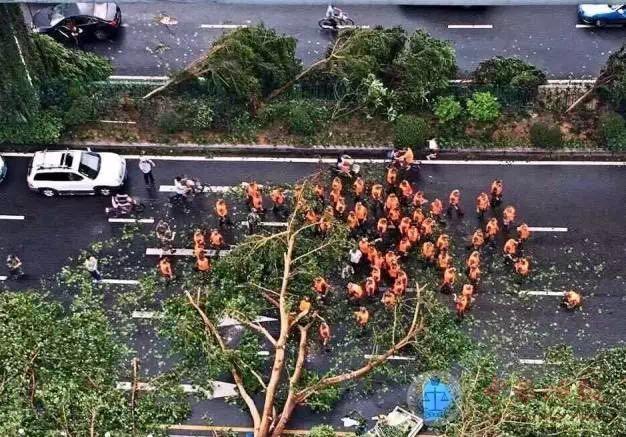 """超强台风""""莫兰迪""""过境厦门,市民携手重建家园"""