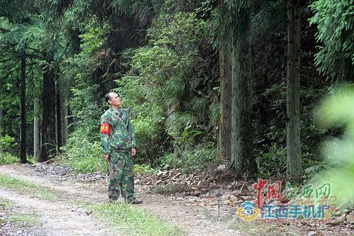 祖孙情系五指峰 三代人接力护绿67年