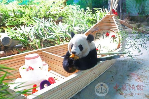 两岸联手制作龙舟蛋糕为4周岁双胞胎大熊猫庆生
